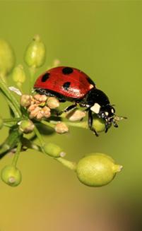ladybud environment