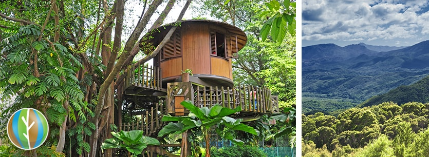 eco-tourism tree house
